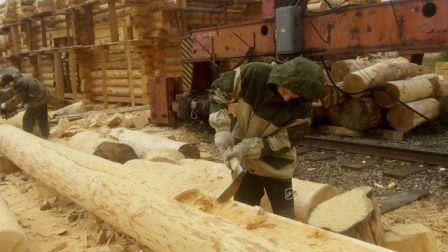 The working platform of the company Bear Log - houses of cedar in Siberia