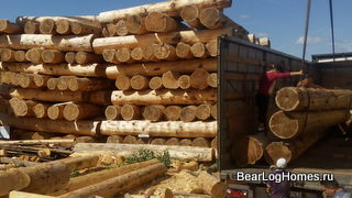 Large selection of logs for cutting log cabins